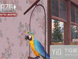 明日之后鹦鹉有什么用  鹦鹉用途详解
